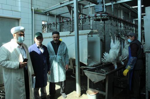 Павлодар: Құс фабрикасына халал сертификаты берілді