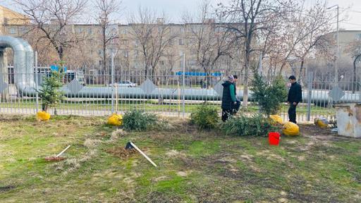 Шымкент: Мешіт еріктілері ағаш отырғызды
