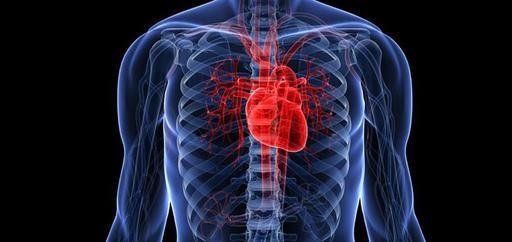 Что говорит современная медицина о предупреждении болезней сердечно-сосудистой системы и атеросклероза